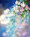 Colorful Spring Flowers Royalty Free Stock Image