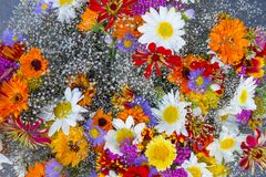 Colorful spring flowers background photographed from above. Colorful spring flowers, daisy and gerber in the flower shop stock photography