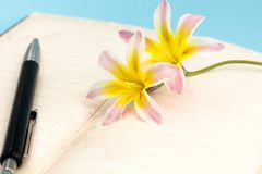 Colorful spring flowers, with blank open diary pages and pen. Colorful spring flowers, with blank open diary pages and pen, closeup background Royalty Free Stock Image