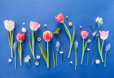 Colorful spring flowers on blue Royalty Free Stock Image