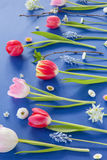 Colorful spring flowers on blue Stock Photography