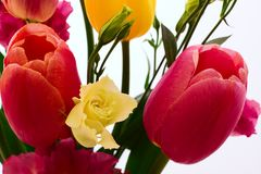 Colorful spring flowers bouquet tulips Royalty Free Stock Image