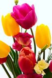 Colorful spring flowers bouquet tulips royalty free stock photography
