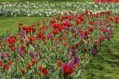 Colorful spring flowers Stock Image