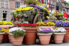 Colorful spring flowers in flower pots Royalty Free Stock Photography