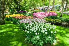 Colorful spring flowers in Holland garden Keukenhof, Netherlands Stock Photos