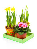 Colorful Spring Flowers In Pots Stock Images