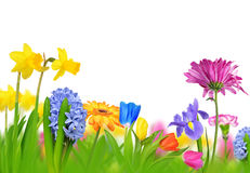 Colorful spring flowers Stock Photos