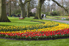 Colorful spring flowers in the park Royalty Free Stock Photos