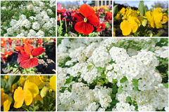 Colorful spring flowers photo collage Royalty Free Stock Images