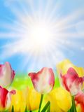Colorful spring flowers tulips. EPS 10 Stock Photos