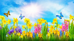 Colorful spring flowers. Colorful flowers and two butterflies Royalty Free Illustration