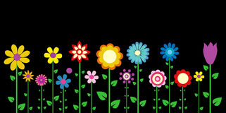 Colorful spring flowers Royalty Free Stock Photos