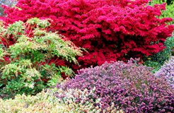 Colorful spring garden. Garden landscaped with colorful shrubs Royalty Free Stock Photography