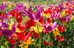 Colorful spring garden background Stock Photos