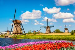 Colorful spring landscape in Netherlands, Europe. Famous windmills in Kinderdijk village with a tulips flowers flowerbed in