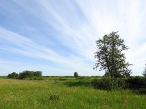 Spring field, trees  and beautiful cloudy sky, Lithuania Stock Photography
