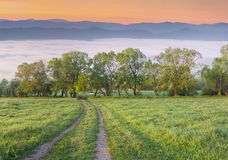 Colorful spring morning in foggy mountains Royalty Free Stock Image
