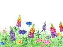 Colorful spring and summer background with wildflowers and grass. Watercolor hand painted meadow stock image
