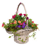 Colorful spring and summer flowers in a basket Royalty Free Stock Photos