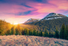 Colorful spring sunrise in the carpathian mountains Royalty Free Stock Images