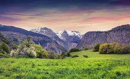 Colorful Spring Sunset In The Blossom Alpine Meadow Royalty Free Stock Image