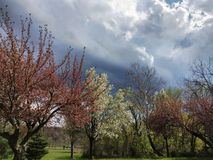 Colorful Spring Trees Under A Stormy Sky. Spring floral trees in a row at a park under a restless stormy blue sky royalty free stock image