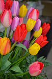 Colorful spring tulip arrangement Stock Images