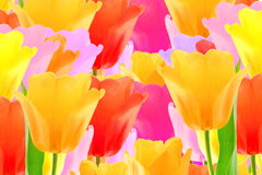 Colorful spring tulip flower background Stock Image
