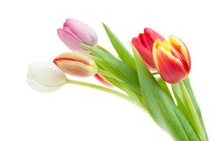 Colorful spring tulips stock photos