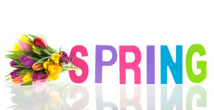 Colorful spring with tulips Royalty Free Stock Photo