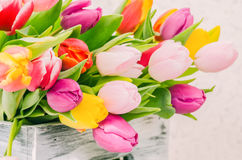 The colorful spring tulips in the box Royalty Free Stock Photos