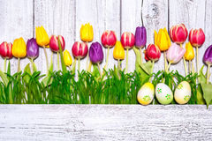 Colorful spring tulips with Easter eggs Stock Images