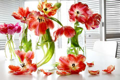 Colorful spring tulips in milk bottles on table Royalty Free Stock Photos