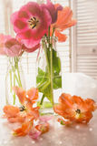 Colorful Spring tulips near window Stock Images