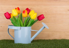 Colorful Spring Tulips. In a watering can with a wood background Stock Image