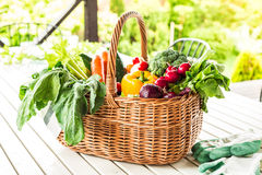 Colorful spring vegetables in wicker basket in the garden Stock Photography