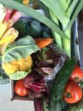 Colorful Spring Veggies. Colorful Freshly picked organic spring veggies for a farm CSA Royalty Free Stock Photos