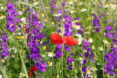 Colorful spring wild flowers Royalty Free Stock Photo