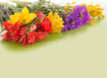 Colorful spring wildflowers on gradient green background Stock Photography