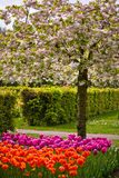 Colorful springflowers in the garden Keukenhof Royalty Free Stock Photos
