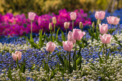 Colorful springtime flowers flowerbed Stock Photos
