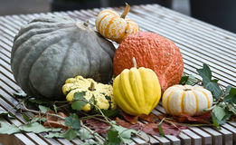Colorful squash Stock Photo