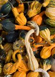 Colorful Squash Royalty Free Stock Image