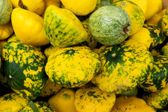 Colorful squash Royalty Free Stock Photography