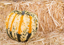 Colorful Squash Royalty Free Stock Photo