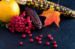 Free Colorful Squash, Red Maple Leaves, Red Berries On Black Background For Thanksgiving Royalty Free Stock Photography - 161032177