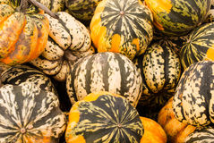 Colorful Squash on a stand Royalty Free Stock Photography