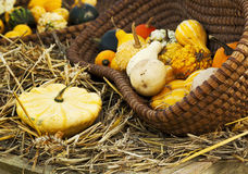 Colorful squashes in basket on hay stock photo