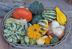 Colorful squashes and pumpkins Royalty Free Stock Photos